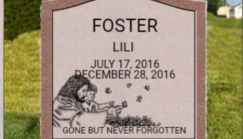 "Free Fundraiser Photo for ""Headstone for Lili"""