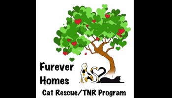 "Free Fundraiser Photo for ""Furever Homes Cat Rescue"""