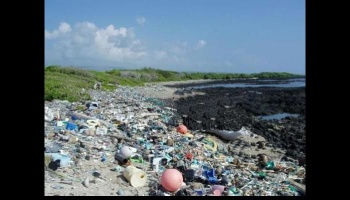 "Free Fundraiser Photo for ""plastic waste advocacy"""